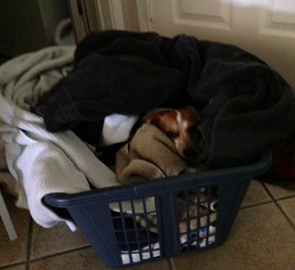 ...and the load of clean towels fresh out of the dryer.